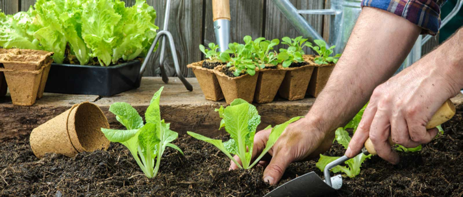 Blog 037 Growing Vegetables