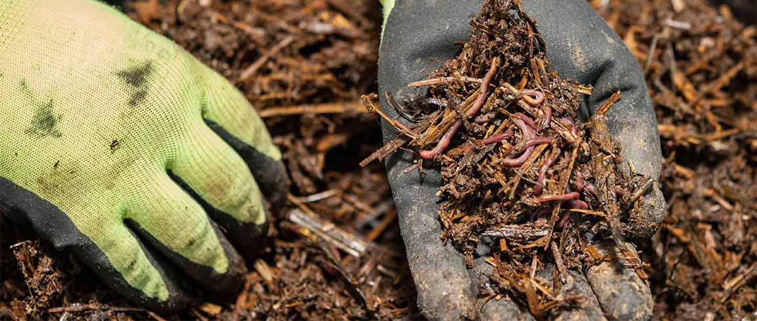 Blog-Compost-Feature-Image.jpg